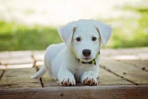nuevo seguro mascotas